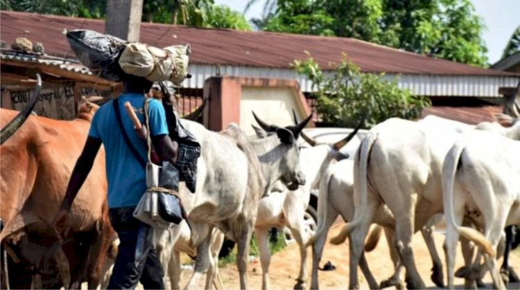 South-West govs ban open grazing - Crime Facts